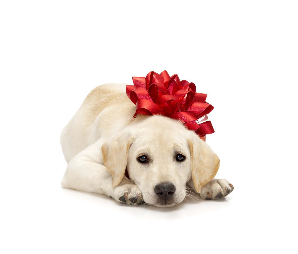 volunteers to help raise guide dogs essendon moonee valley blog. Black Bedroom Furniture Sets. Home Design Ideas