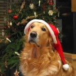dog at Chriastmas